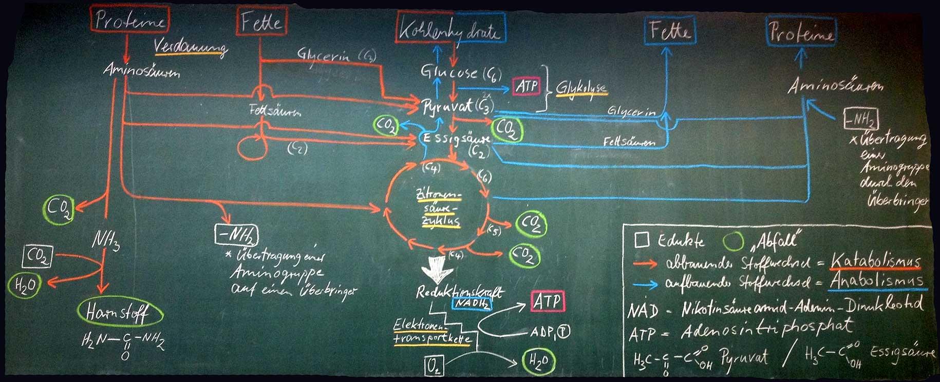 Start >> Biologie & Chemie
